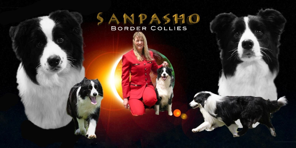 Sanpasho Border Collies